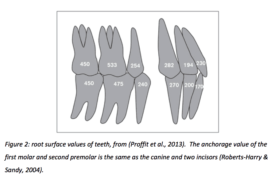 Root Surface Values of Teeth
